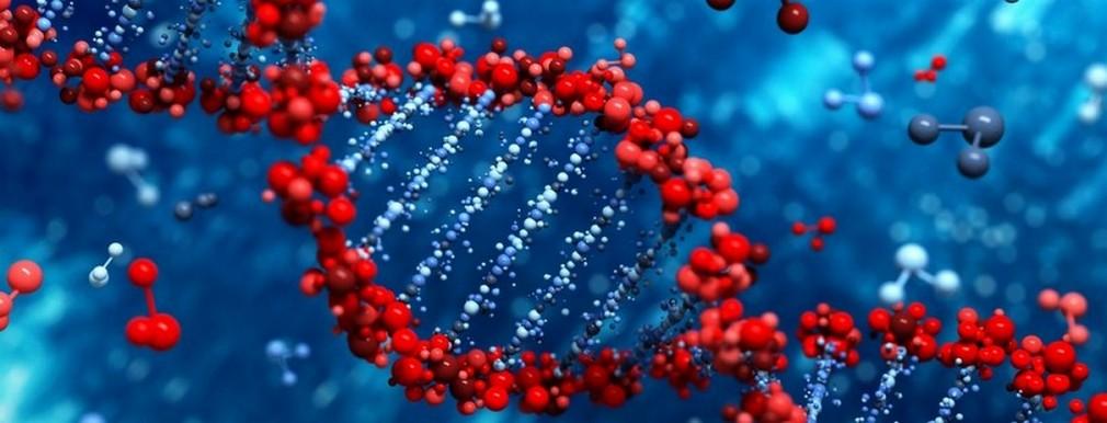 ДНК Экспертизы